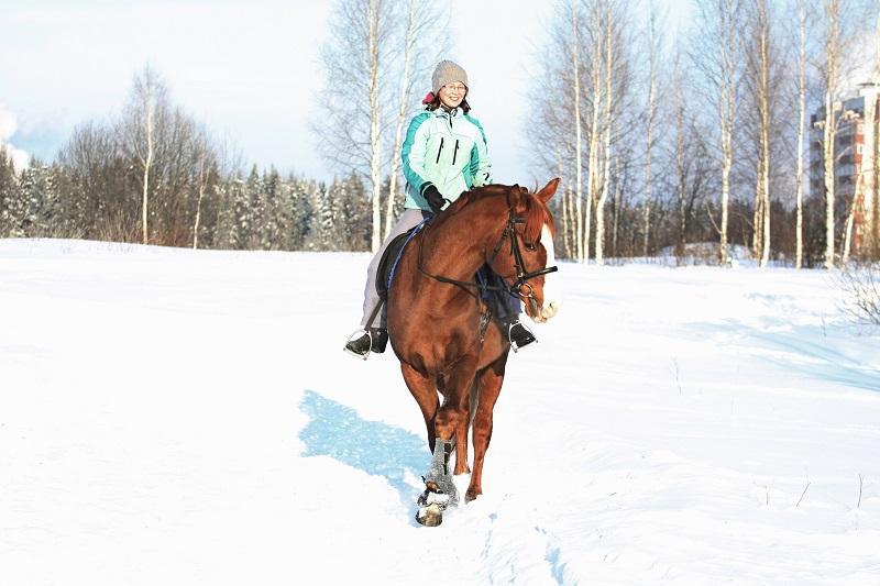 В Кирове откроется конный парк (+ФОТО)