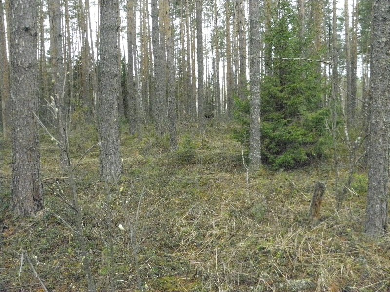 Кировчане сфотографировали маленьких лосей