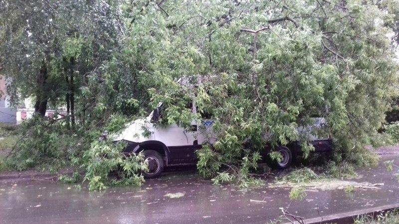 В Кирове из-за сильного ветра рухнуло несколько деревьев