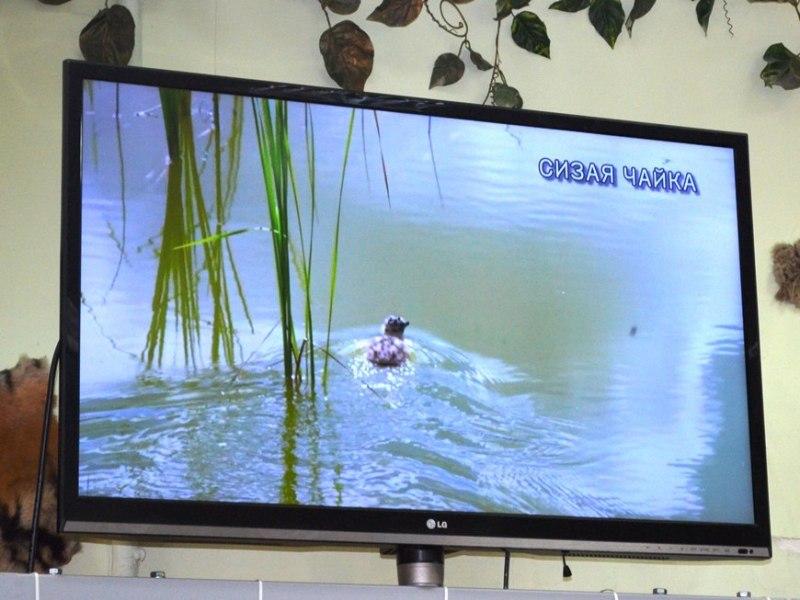 12-летняя кировчанка собрала фотоколлекцию редких птиц