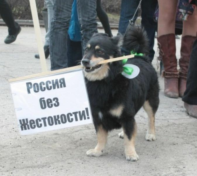 Митинг взащиту животных провели активисты Омска