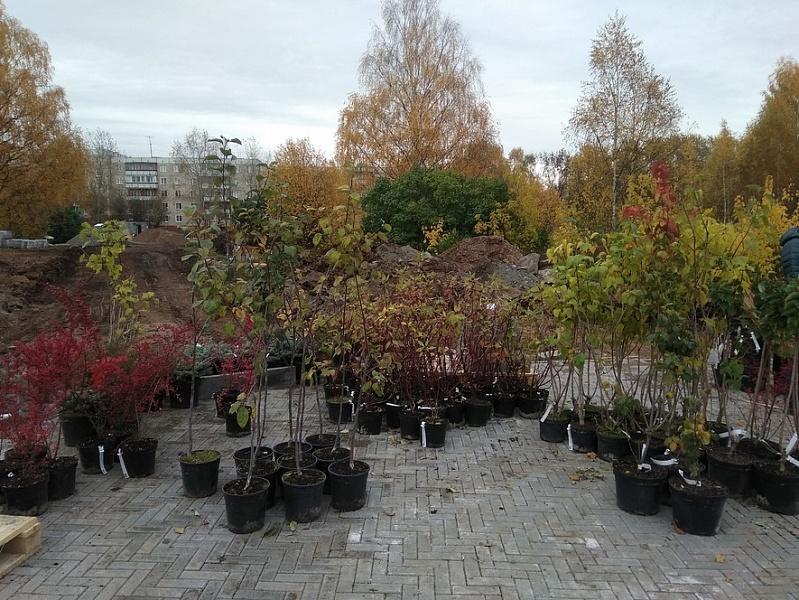 Кировчан просят не воровать новые деревья из Кочуровского парка