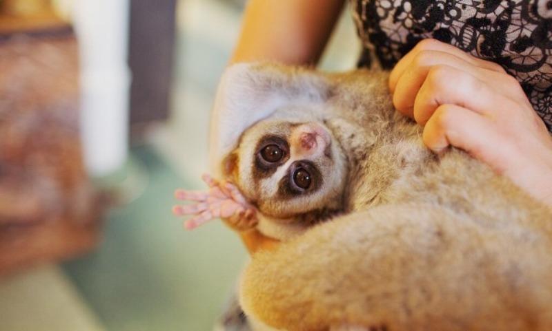 Кировчане могут купить экзотических зверей