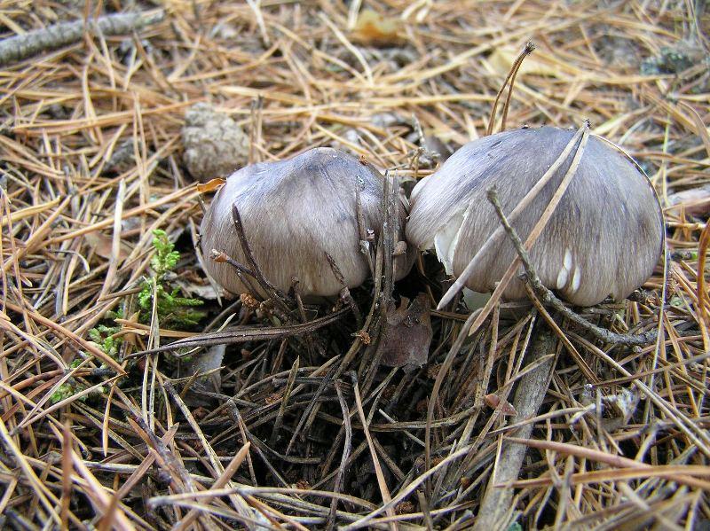 Нургуш приглашает за осенними грибами