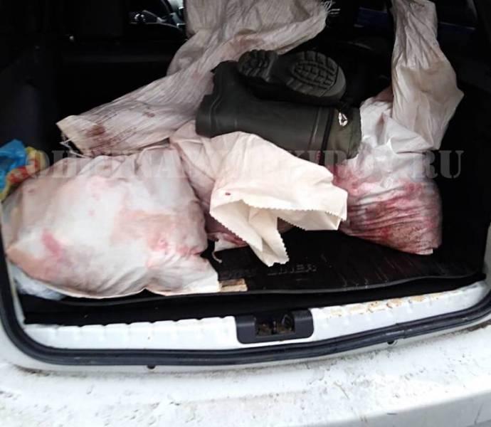 Задержаны браконьеры, которые сбили инспекторов, пытаясь скрыться от них на автомобиле