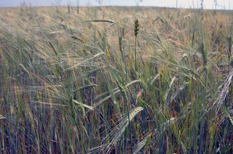 Сельскохозяйственная отрасль Кирова получит компенсацию запотерянный урожай