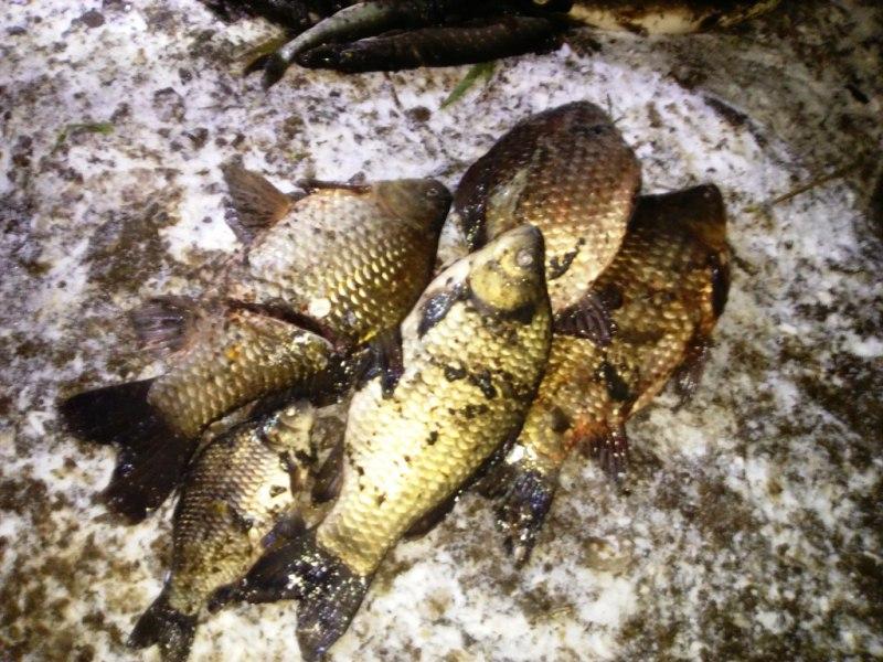Богатый улов достал из реки житель Санчурского района