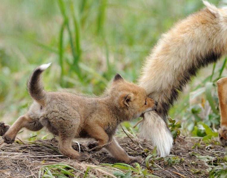 Кировчане увидят проявление материнской любви у животных