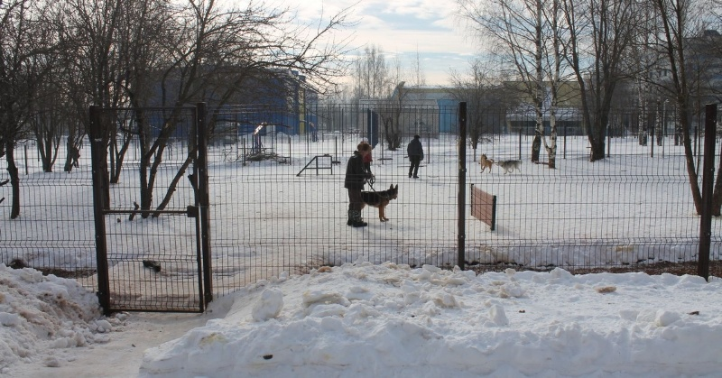 В Кирове для выгула собак оборудована площадка в Кочуровском парке