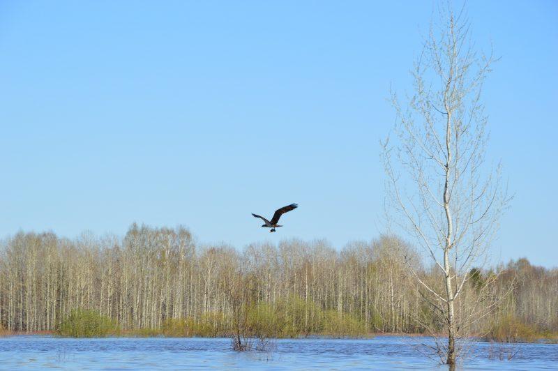 Сотрудники областного заповедника сфотографировали редкую птицу
