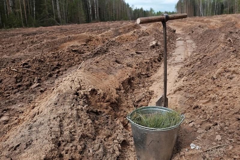 Более 20 миллионов деревьев высадят в регионе в 2019 году