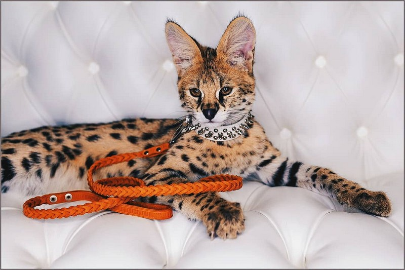 Среди кировчан стало модно фотографироваться с животными