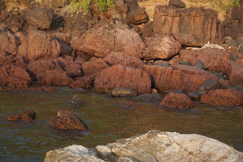 Вятский палеонтолог сфотографировал ядовитых медуз