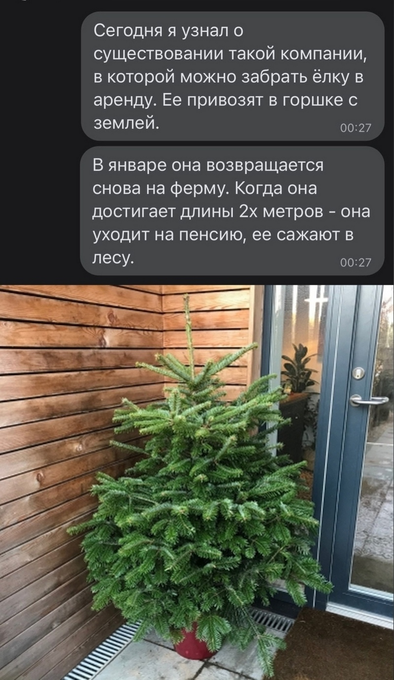 Соседи кировчан сдают ёлки в аренду на праздники