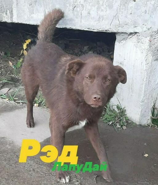 В Кирове спасают пса с капканом на морде