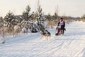 Житель Кировской области победил в собачьей гонке