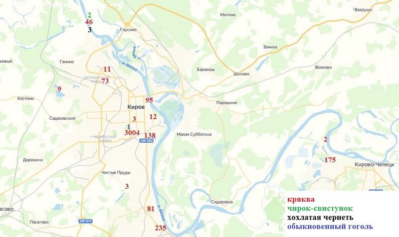 Кировчане подсчитали, сколько уток живёт у Диорамы