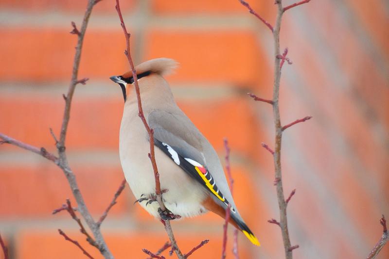 Кировчан наградили за фото вятских птиц