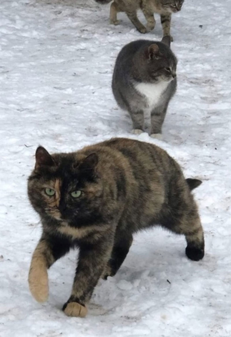В Кирове волонтеры пристраивают кошачью стаю
