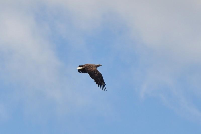 В Нургуше сократилось число птиц