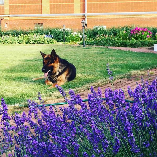 Собака из Кирова победила на выставке благодаря молитвам хозяйки