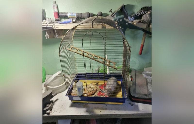 В Кирове бесплатно раздают необычных животных