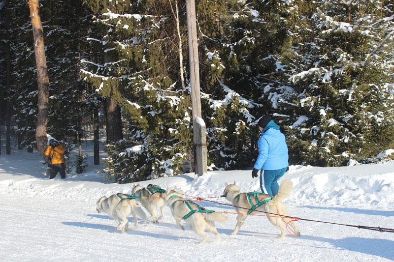 В Кировской области прошли гонки на собачьих упряжках
