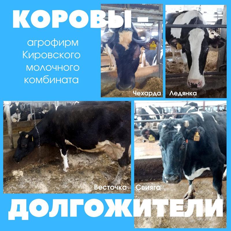 В Орловском районе нашли корову-долгожительницу