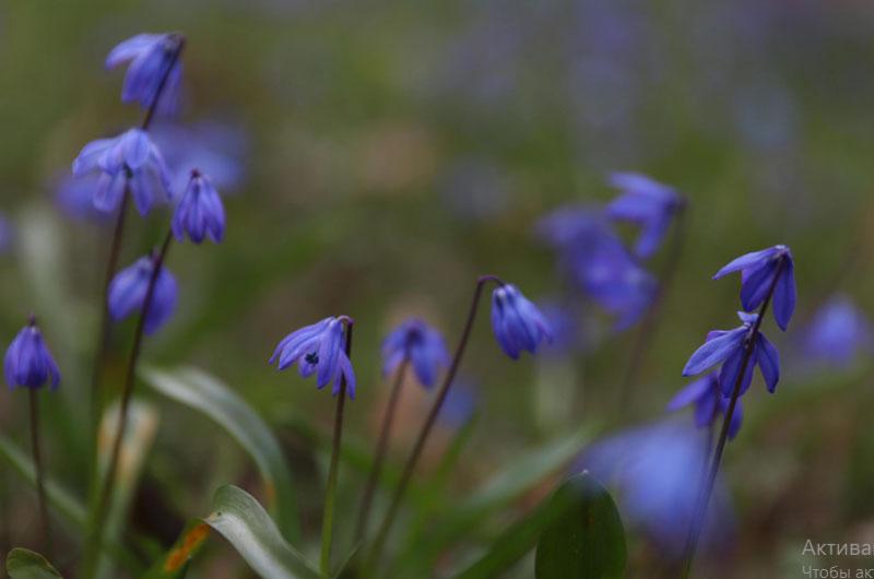 Кировчане увидят цветение нескольких тысяч тюльпанов