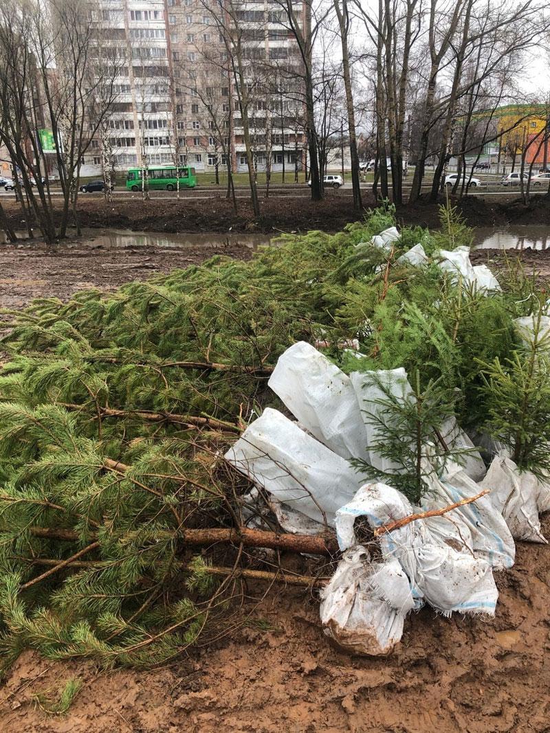 В Кирове начали озеленять Уткин парк