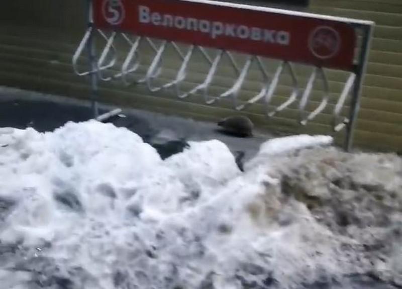 В Кировской области начали просыпаться животные, предвещающие тёплую весну