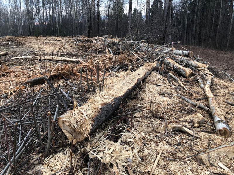 На Филейке вырубили сотни деревьев