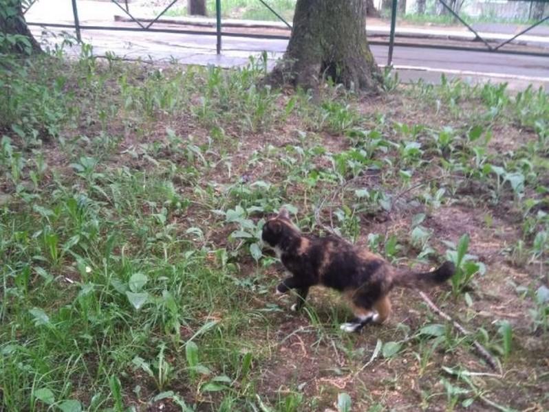 Жители Кирово-Чепецка нашли кошку необычного окраса