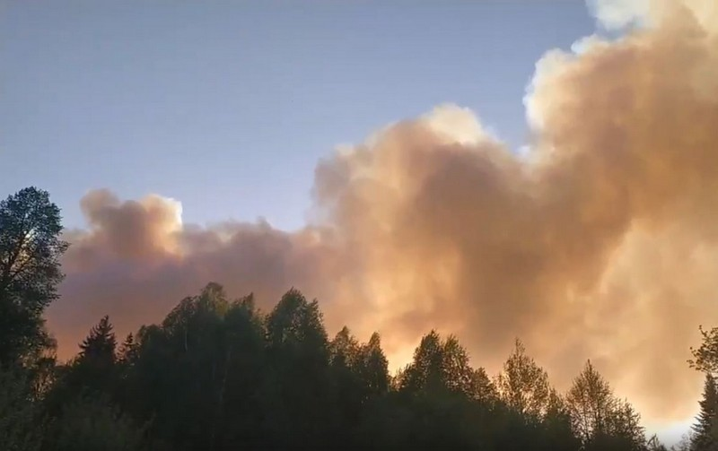 В Кировской области сгорело огромное поле