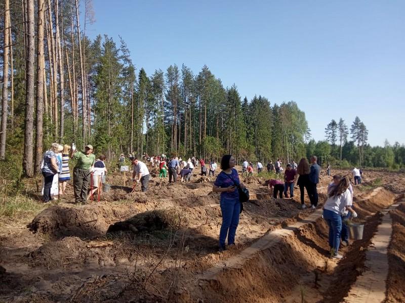 В Кировской области вырастут Сады Памяти