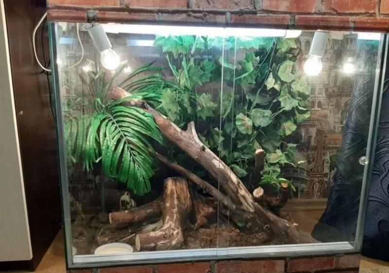 В Кирове продают императорского удава, необычных гекконов и гадюк