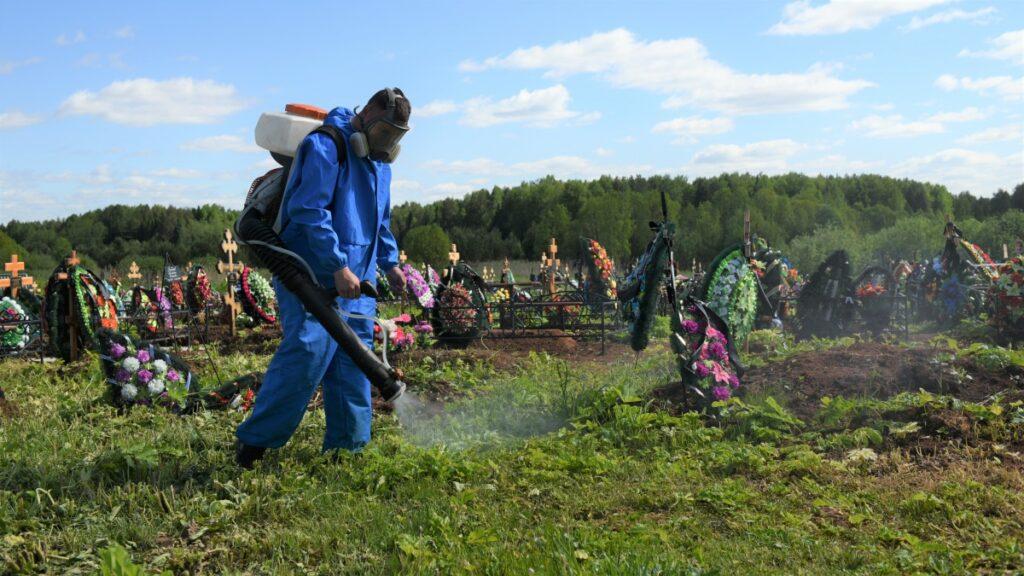 Кировское кладбище освобождено от борщевика