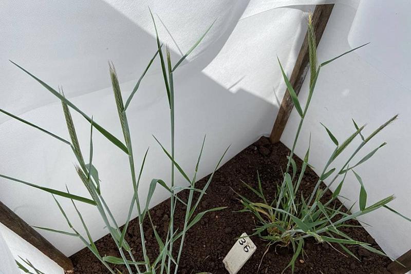 В Кировской области вывели новые сорта смородины и лука