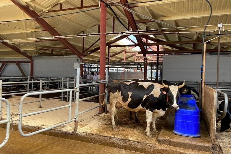 В Фаленском районе открыта новая ферма на 400 голов