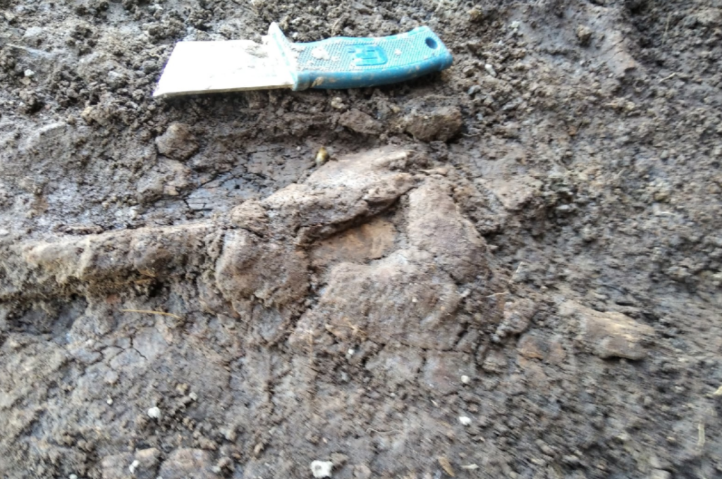 На севере Кировской области обнаружили плезиозавра