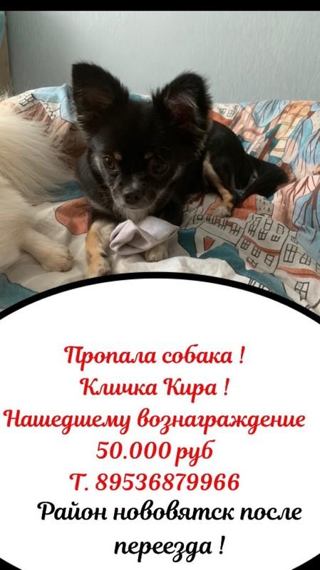 В Кирове за пропавшую собаку обещают вознаграждение в 50 тысяч рублей