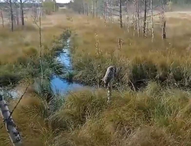 Жители Кировской области сообщают о сове, которая неделю сидит на одном месте