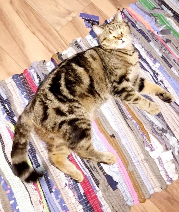 В Кировской области за пропавшего кота обещают вознаграждение в 20 тысяч рублей